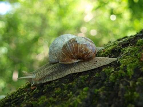 Snail Shell Crawl Nature Mollusk Animal Mucus