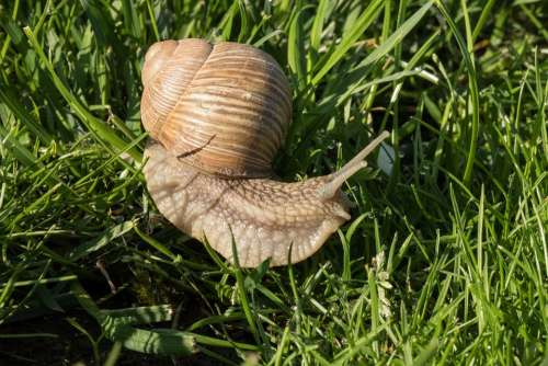 Snail Tim H Nature Grass In The Morning