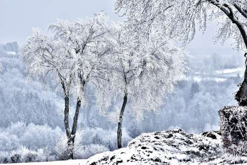 Snow Landscape Trees Winter Nature Scenic