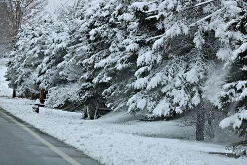 Snow Snowfall Winter Cold Snowflakes Blizzard