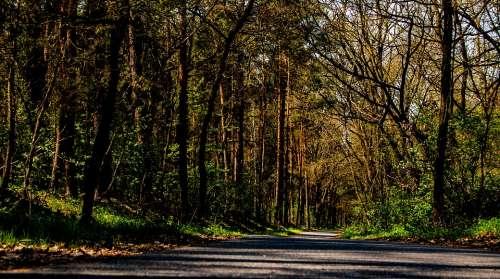 Spreewald Nature Forest Trees Lübbenau Germany