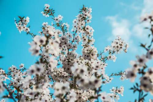 Spring Daylight Blue Blossom Nature Sunlight Tree