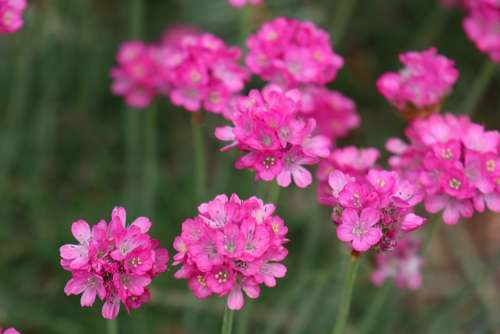 Spring May Garden Flowers Pink Blooming