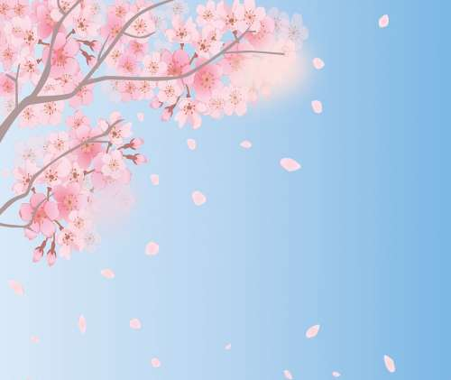 Spring Background Cherry Blossoms Sky Spring Bloom