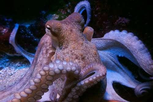 Squid Octopus M Calamari Meeresbewohner Food