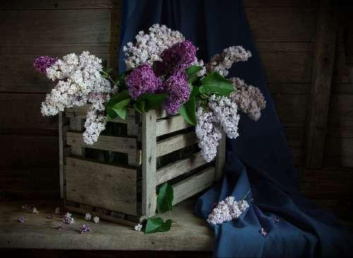 Still Life Lilac Shadow Box Flowers