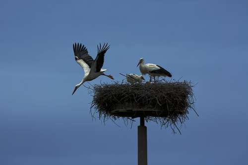 Stork Bird Wing Animals Rattle Stork Animal World