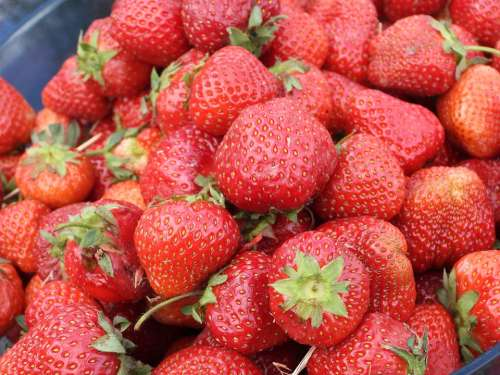 Strawberry Strawberries Fruit May Red Food