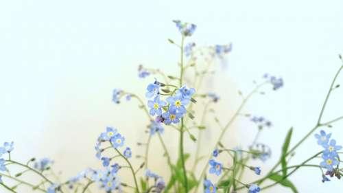 Summer Flowers Nature Blue Green White Blossom