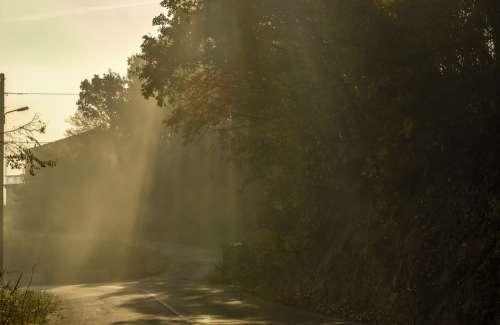 Sunrays Nature Trees Sky Landscape Sunlight