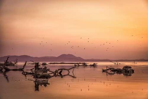 Sunset Sea Seagulls Colors Landscape Lake Water