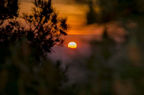 Sunset In The Forest Sun Nature Evening Landscape