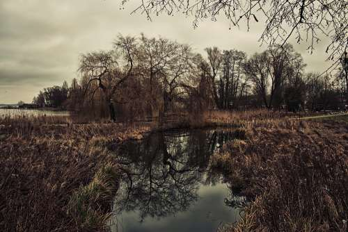 Swamp Nature Forest Moor Landscape Water Mystical