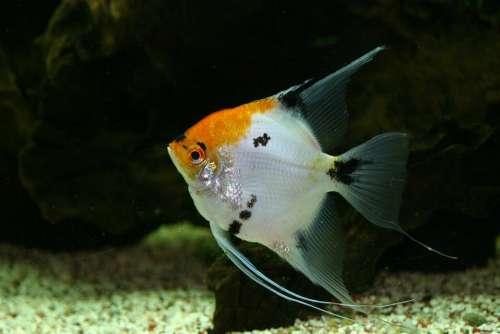 Tank Fish Tropical Aquarium Aquatic