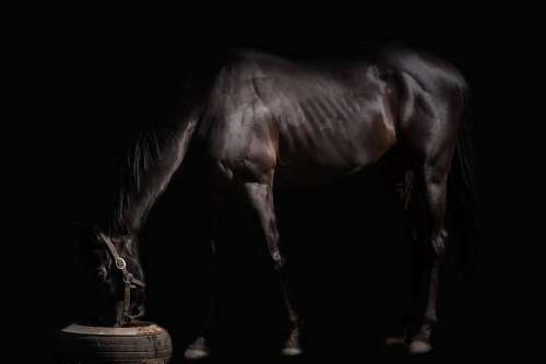 The Horse Animal Stallion Pony Mammal Barn