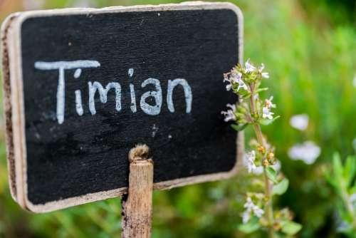 Thyme Blackboard Black Sign Chalkboard Nature