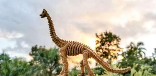 Toy Fossil Dinosaur Fossil Pretend Extinct Dinosaur