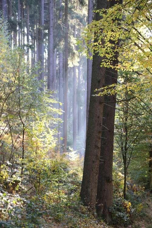 Tree Nature Leaves Light Forest Landscape Green