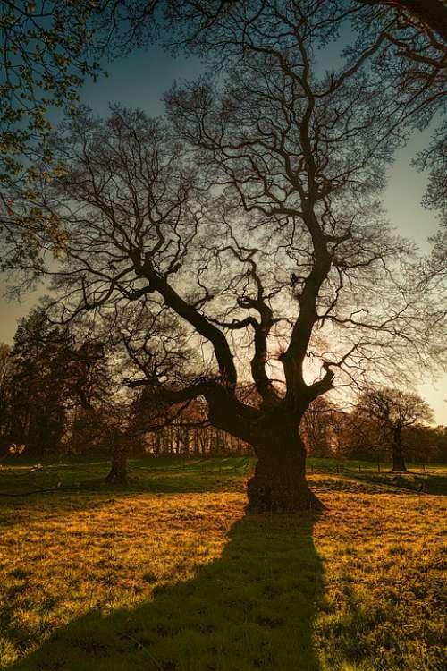 Tree Kahl Winter Evening Sun Autumn Sunset
