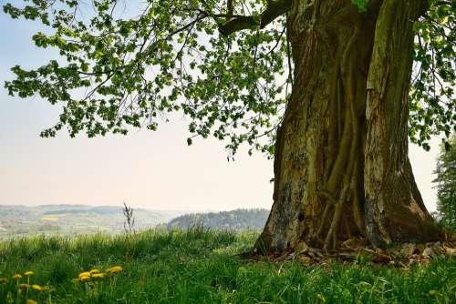 Tree Hollow Nature Landscape Sky Tribe Log