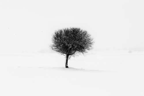 Tree Minimal Nature Minimalism Natural Green