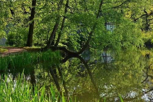 Tree Mirroring Lake Landscape Abendstimmung