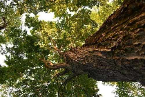 Tree Sunshine Forest Bark Nature
