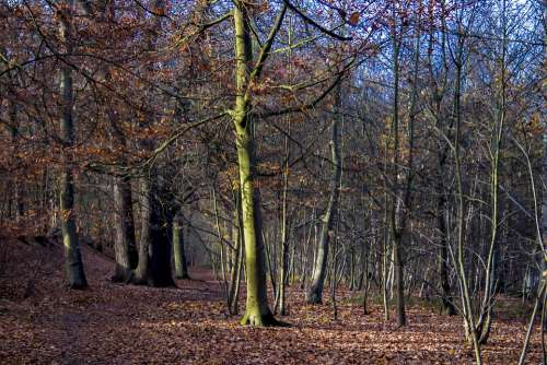 Trees Forest Nature Landscape Mystical Wood Green