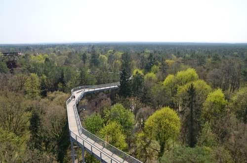Treetop Path Forest Landscape Destination Hiking