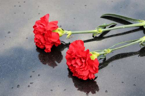 Two Red Carnations Black Marble Symbol Decoration