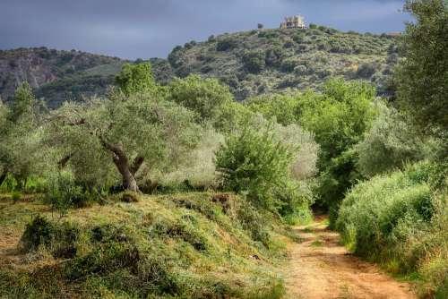 Walk Hiking Crete Greece Flower Meadow Olive Tree