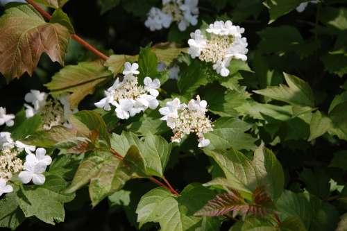 White Flower Sheet