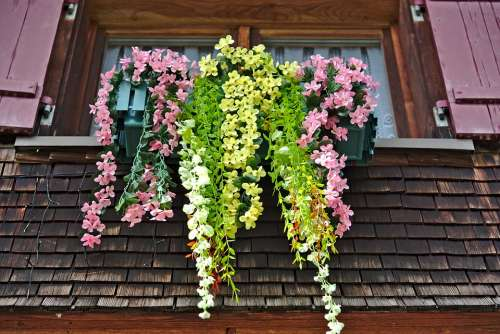 Window Floral Decorations Shutters Shingle