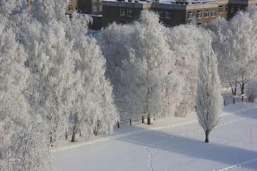 Winter Leann Trees Frost In Winter Snow Tree