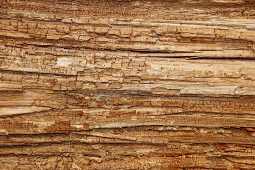 Wood Tree Wood Rot Log Structure Rot