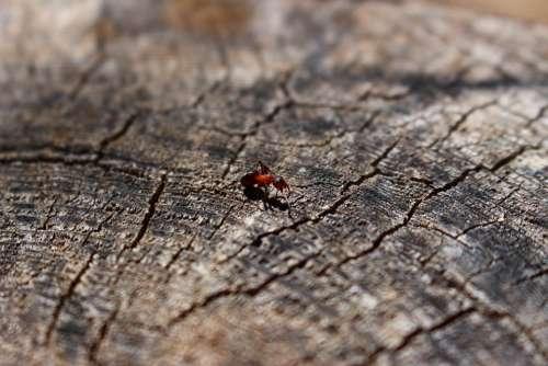 Wood Ant Tree Nature Animal Ants