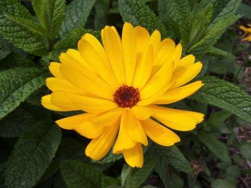 Worry Flower Nature Plants Gardening Garden