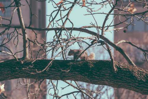 City Squirrel