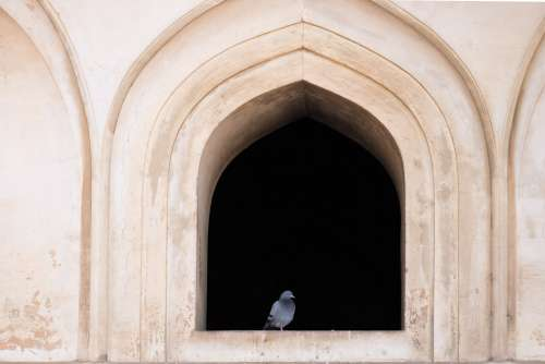 Pigeon Sitting in Front of an Old Window