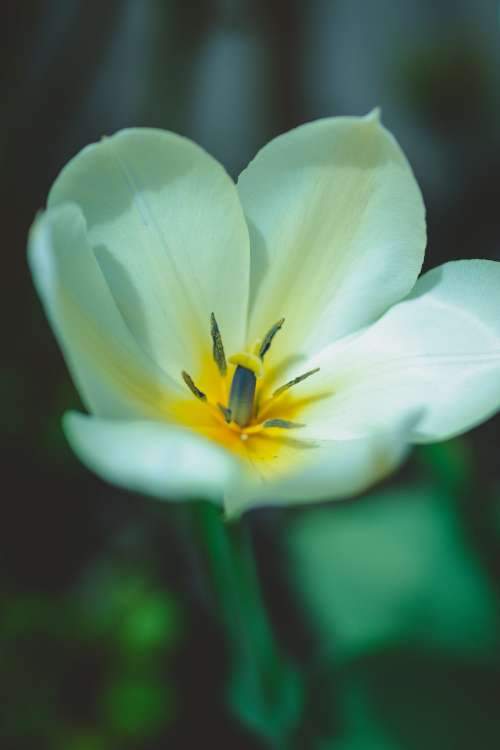A Close Up Of A White Flower Photo