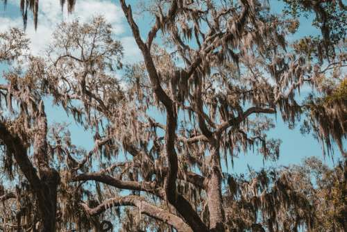 Clear Blue Skies Peek Through The Branches Of Florida Glade Photo