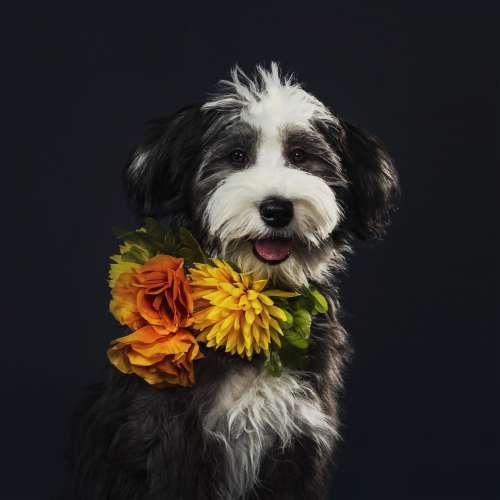 Fluffy Puppy Portrait Photo