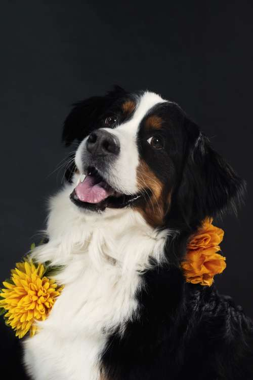 Happy Dog Wears Flowers Photo