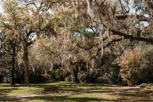 Park Bench In A Lush Green Oak And Palm Grove In Florida Photo