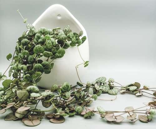 Pot Plant Tries To Escape Photo