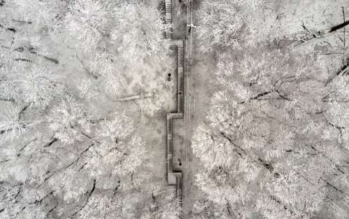 Snow-Covered Stairs Cut Shapes Through Snow-Capped Trees Photo