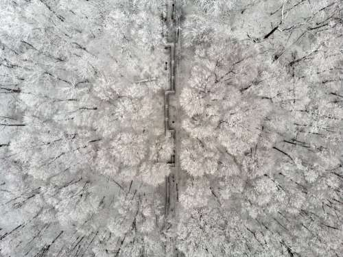 Snowy Trees Divided By A Staircase Photo