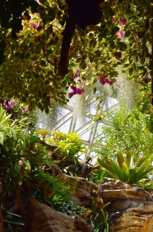 Sunlight Breaks Through The Green Thicket Of A Conservatory Photo