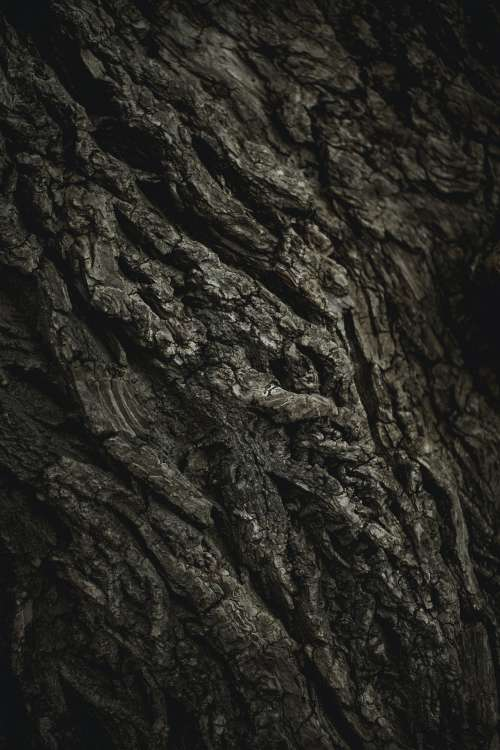 Texture Of Old Tree Photo