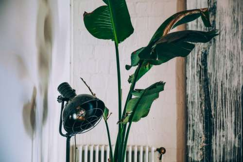 Vintage Lamp And House Plant Photo